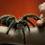 Strach anebo fobie