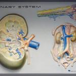 Příznaky zánětu močového měchýře
